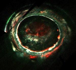Les aurores polaires de Jupiter