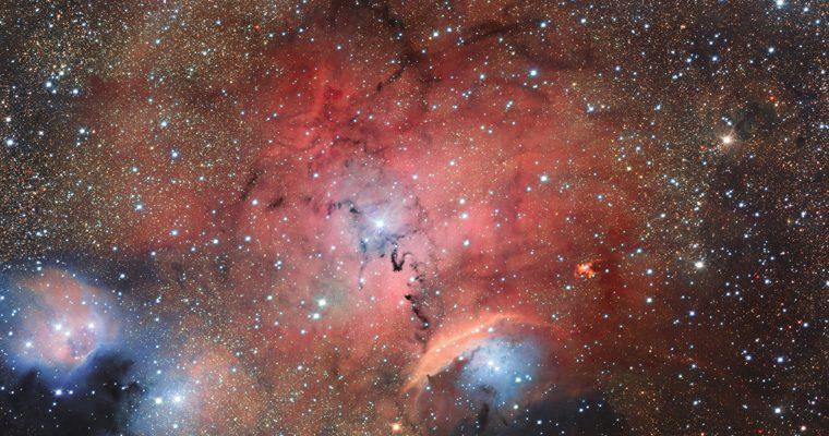 pépinière stellaire